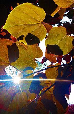Leaves, Colorful, Autumn, Nature, Fall, Foliage, Season
