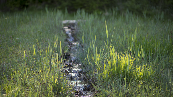 Grass, Green, Nature, Outdoors, Outside, Stream