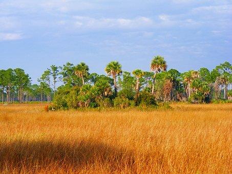Prairie, Nature, Grass, Wetland, Sky, Outside