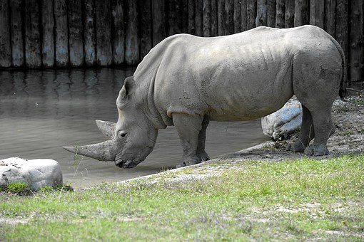 Rhino, Animals, Big Game, Pachyderm, Nature Park