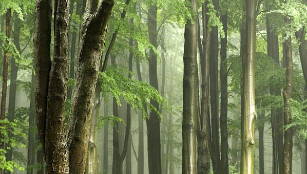 Gentle Light, Tree Trunks, After The Rain, Wet, Haze