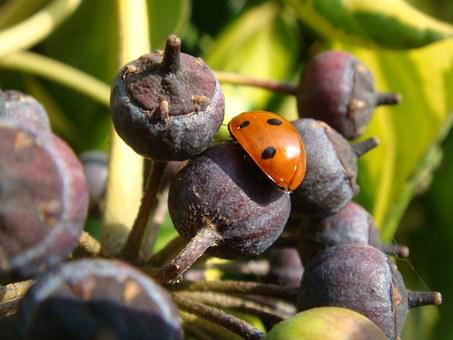 Heers Critter, Berries, Fruits, Insects, Spring, Sun