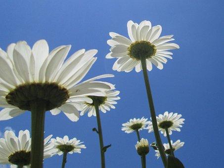 Dailies, Flowers, Summer