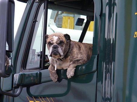 Dog, Window, Truck, Semi, Pet, Animal, Transportation