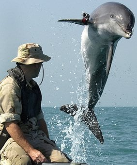 Dolphin, Marine Scientists, Exploration Of The Sea