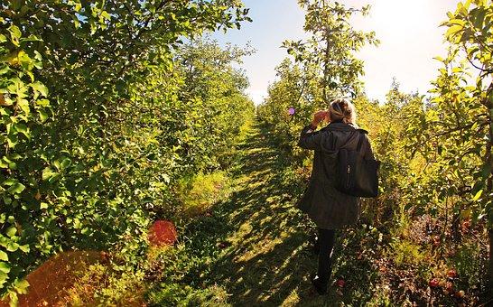 Apple, Farm, Girl, Walk, Sun, Fruit, Nature, Garden