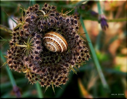 Snail, Shell, Close, Snail Shell, Animals, Mollusk