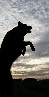 Dog, Dangerous, Dark, Shadow, Sky, Pet, Abendstimmung