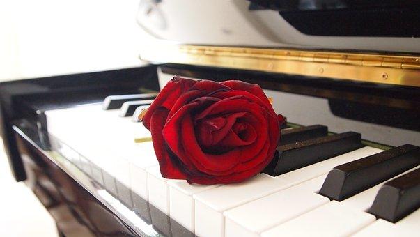 Rose, Piano, Living Room, Romantic, Red, Keys