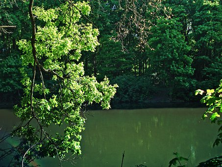 Forest, Pond, Trees, Trees Near The Water, Forest Pond