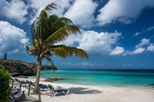 Beach, Palm Tree, Palm, Tropical, Vacation, Summer, Sea