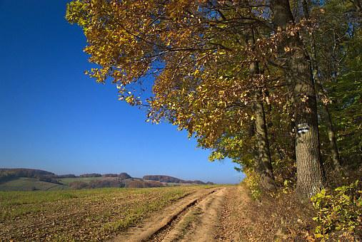 Way, Forest, Trail, Valleys Near Cracow