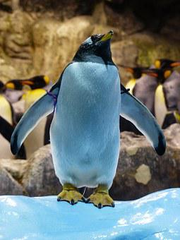 Donkey Penguin, Penguin, Attention, Take A Look Around
