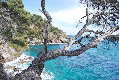 Sea, Tree, Azure Blue, Corniche, Azure, Nature, View