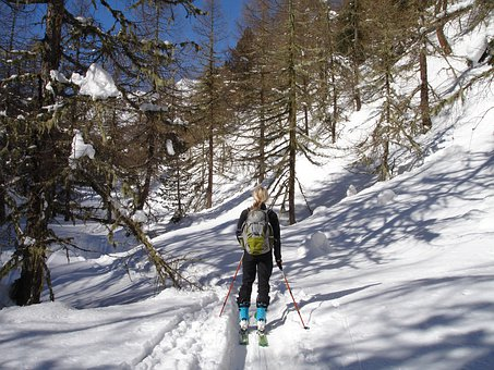Backcountry Skiiing, Forest, Ski Touring, Skiing