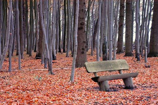 Forest, Bank, Bench, Nature, Autumn, Leaves