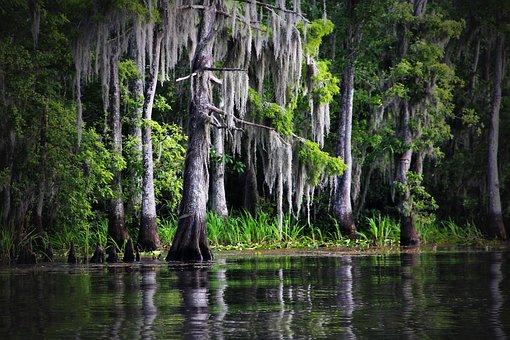 Swamp, Bayou, Louisiana, Moss, Cypress, Nature