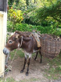 Donkey, Animal, Boipeba