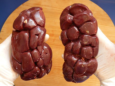 Bovine Kidney, Offal, Meat, Kidneys, Beef, Raw, Eat