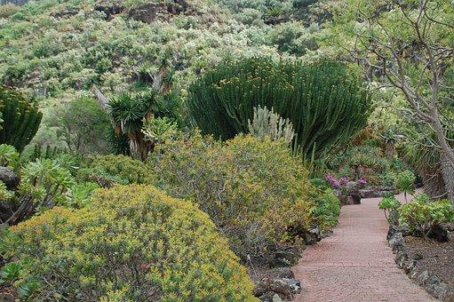 Canary Garden, Nature, Gran Canaria