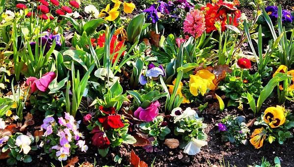 Garden, Colorful, Flora, Nature, Spring, Pink, Plant