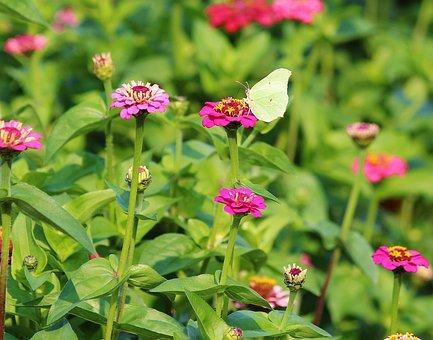 Asters, Flowers, Field, Butterfly, White, Sale