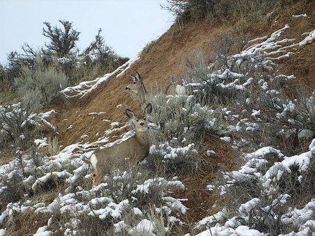 Deer, Camouflage, Nature, Snow, Wildlife, Animal, Wild