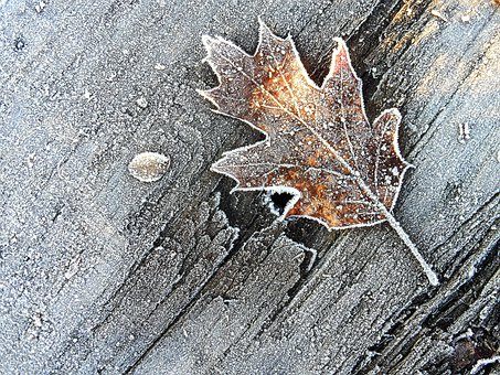 Leaf, Winter, Brina, Frost, Wood, Brown Leaf