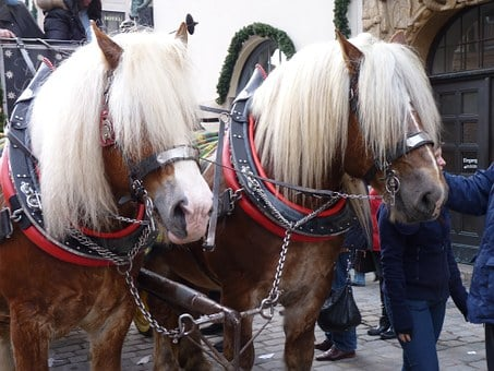 Horses, Horse Drawn Carriage, Blond Mane