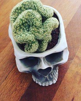 Brain, Cactus, Skull