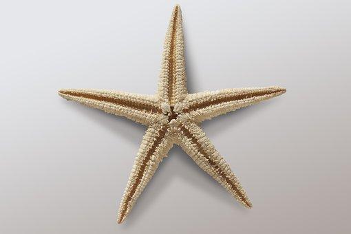 Starfish, Asteroidea, Echinoderms Sea, Holiday, Tropics