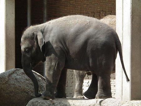 Elephant, Zoo, Hotels In Berlin