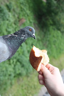 Dove, Feed, The Jitters, Bread, Shock, Muffin, Chit