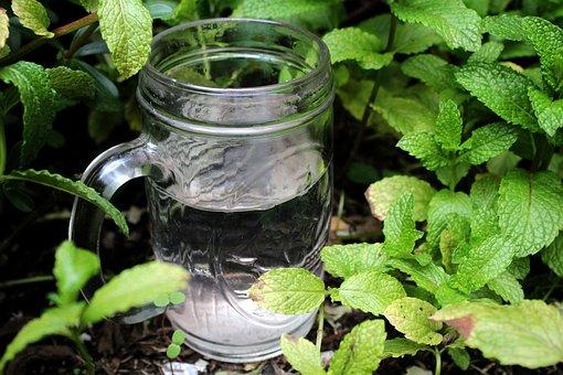 Water, Eucalyptus, Plntas, Vase, Glass