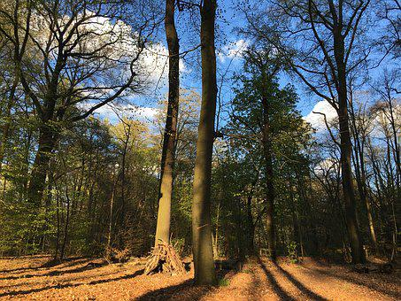 Forest, Nature, Trees, Berlin, Forest Tegel