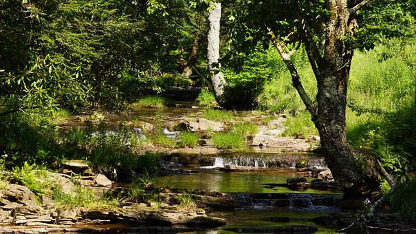 Dolly, Sods, Wilderness, West, Virginia, Nature