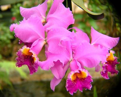 Orchids, Purple, Blossom, Flowers, Petals, Pink, Yellow