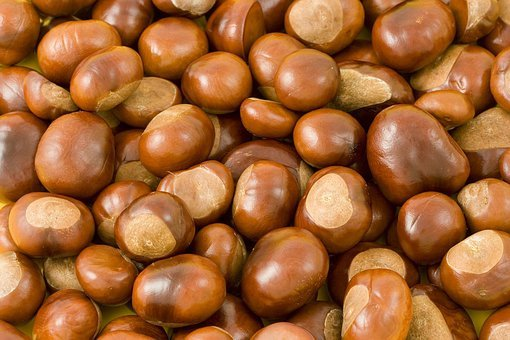 Chestnut, Chestnuts, Fall, Autumn, Background, Prickle
