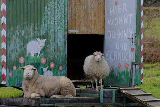 Sheep, Bauwagen, Live