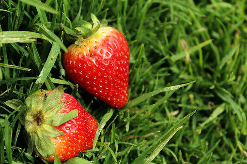Strawberries, Strawberries On Grass, Open Air, Grass