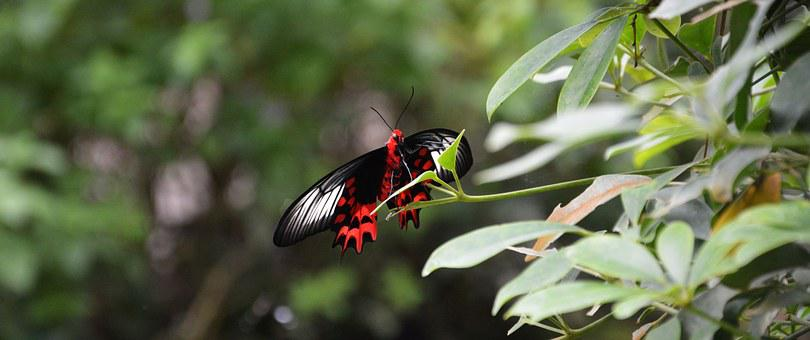 Butterfly, Tropical House, Butterfly House, Wing