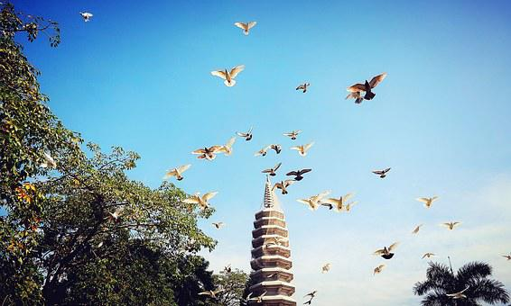 Xiamen, Pigeon, Baita, The Scenery