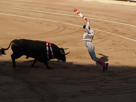Banderillero, Torero, Banderillas, Bulls