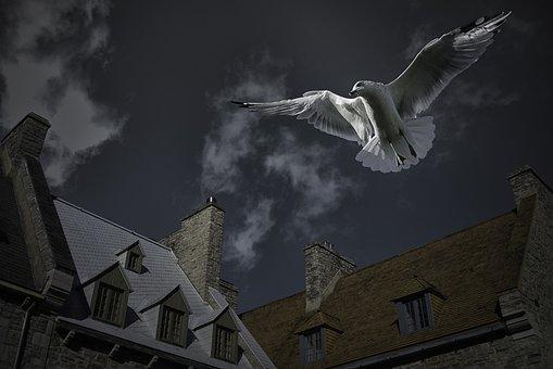 Seagull, Place Royale, Quebec City, Maison Rivet, Bird