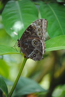 Butterfly, Butterfly Sanctuary, Key West