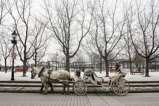 Horse, Carriage, Montreal, Princess, Queen, Fantasy