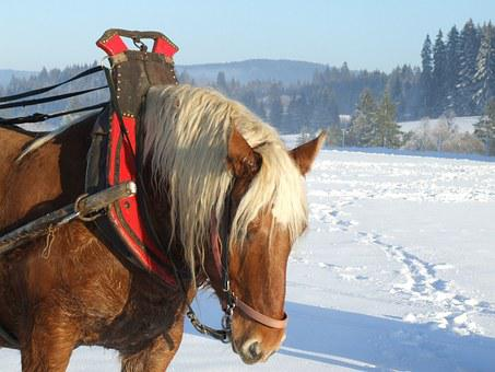 Horse, Nature, Landscape, Animal, Tourism, Good Looking