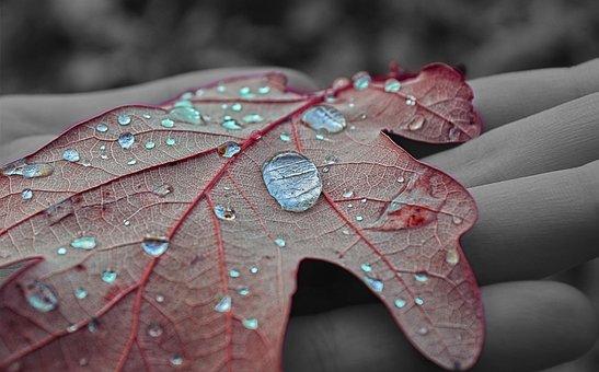 Nature, Water, Drops Of Water, Macro Photography, Sheet