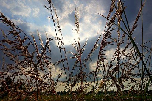 Sedge, Silhouette, Stalk, Shape, Skies, Clouds