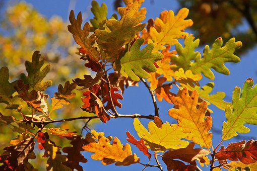 Leaves, Tree, Autumn, Symphony Of Colors